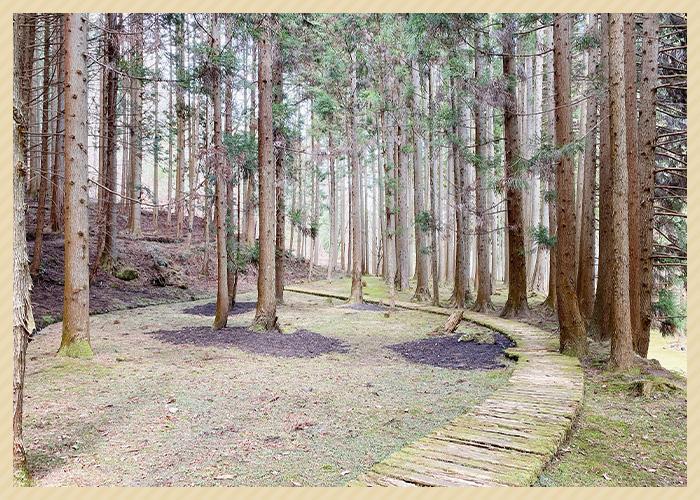 芸術の森の木々